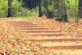 Stairs in a park in autumn day. Royalty Free Stock Photo