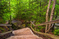 Stairs on trail to Blackwater Falls, at Blackwater Falls State P Royalty Free Stock Photo