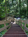 Stairs in the woods Royalty Free Stock Photo