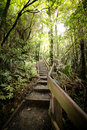 Stairs in the woods of new Zealand Royalty Free Stock Photo
