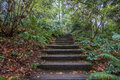 Stairs Through The Woods Royalty Free Stock Photo