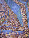 Stairs and yellowish autumn leaves covered with Stock Photo
