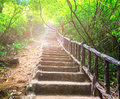 The stairway in deep forest Royalty Free Stock Photo