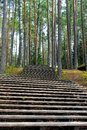 Stairway in forest Stock Image