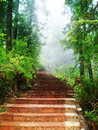 Stairway through forest Royalty Free Stock Photo
