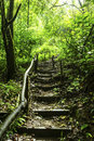 Stairway in the forest Royalty Free Stock Photo