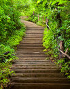 Stairway to forest Royalty Free Stock Photo