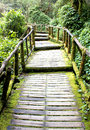 Stairway to forest walk into nature moss Royalty Free Stock Images