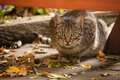 Stalking cat picture of sitting under bench Stock Photo