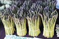 Stalks of Aspargus Stand in a Bunch at the Farmers Market Royalty Free Stock Photo