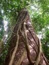 Stalks on tree trunk Royalty Free Stock Photo