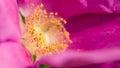 Stamen detail of in bloom Stock Images