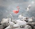 Stand out from a crowd - Flamingo