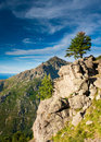 Standalone tree in the mountains Royalty Free Stock Photography