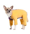 Standing chihuahua doggy in snow suit orange isolated on white Royalty Free Stock Photo
