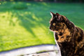 Standing guard a tortoiseshell cat sits on the deck rail on a sunny day watch over her domain Royalty Free Stock Photos