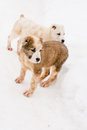Standing puppies Royalty Free Stock Photography