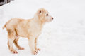 Standing puppy Royalty Free Stock Images