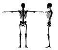 Standing skeletons skeleton black isolated on white made in d software Stock Photo