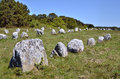 Standing stones at Carnac in France Royalty Free Stock Photos