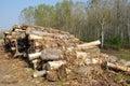 Stapel des Brennholzes Lizenzfreie Stockbilder