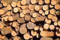 Stapel van boomstammen Stock Afbeelding