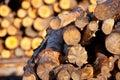 Stapel van boomstammen Stock Fotografie