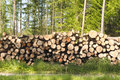 Stapled logs in front of forest Royalty Free Stock Photography