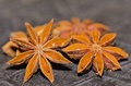 Star anise dried berries for herbal medicine Royalty Free Stock Photos