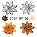 Star anise. Isolated on a white background . Stock Photos