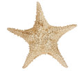 Star fish isolated on white with a clipping path Stock Images