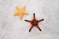 Star fish pic closeup of Royalty Free Stock Photography