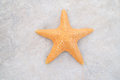 Star fish pic closeup of Royalty Free Stock Photo