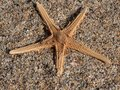 Star fish on sand Royalty Free Stock Photo