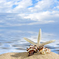 Star fish with sand Royalty Free Stock Photo
