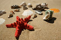 Star-fish and shells Royalty Free Stock Images