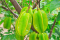 Star fruit green on the tree Royalty Free Stock Photos