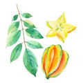 Star fruit watercolor set. Royalty Free Stock Photo