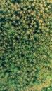 Star Moss Background Pattern