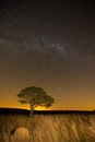 Star scape with lone tree brown grass and milky way and soft lig in light Stock Photo