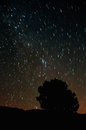Star trails of the perseid meteor shower descanso ca Royalty Free Stock Photos
