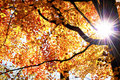 Starburst through the limbs of a tree in autumn fall Royalty Free Stock Photos