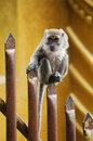 Stare of an monkey standing on the top sharp fencing Stock Photography