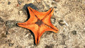 Starfish Stock Photo