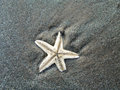 Starfish on the beach close up Royalty Free Stock Image