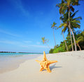 Starfish on a beach, Maldives island Stock Photo