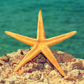 Starfish on the beach picture of a a rock of a with a retro effect Royalty Free Stock Images