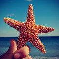 Starfish on the beach with a retro effect picture of someone holding ocean in background Stock Photos