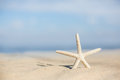 Starfish on a beach sand Royalty Free Stock Photo