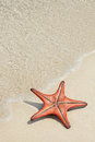 Starfish on the beach star fish white sandy Royalty Free Stock Photography